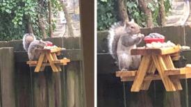 Un homme construit une adorable petite table de pique-nique pour les écureuils dans son jardin