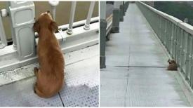 Un chien est trouvé en train d'attendre sur un pont quelques jours après le suicide de son maître